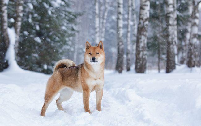 Фото: на більшій частині України очікується сніг