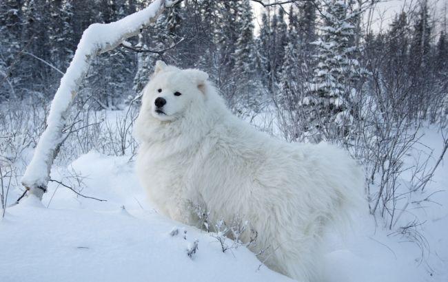 Фото: в Украине местами снег