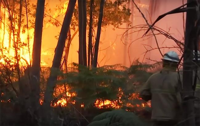 Фото: лесной пожар (webscreenshot YouTube RT channel)