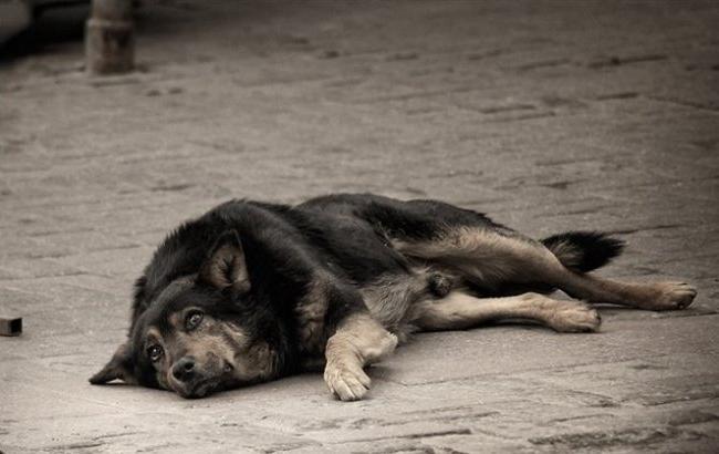 Фото: Бездомна собака (arenda4all.ru)