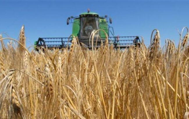 посев яровой пшеницы