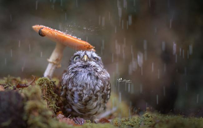 Фото: на западе Украины ожидаются дожди